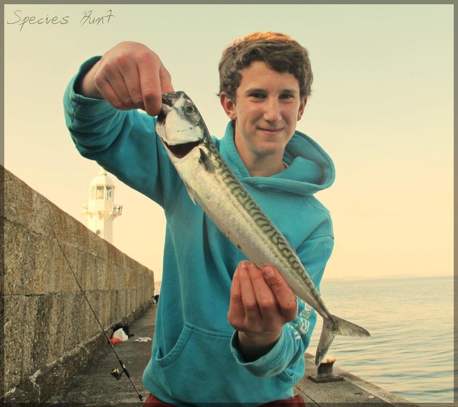 mevagissey fishing