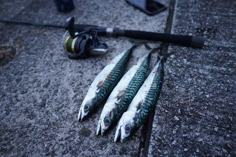 fishing mackerel hampshire